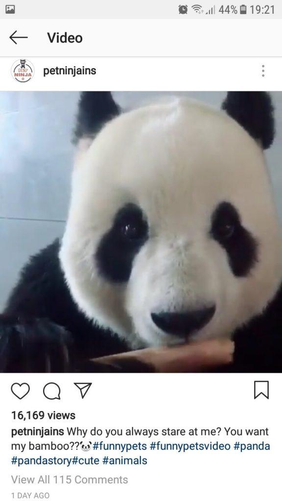 Love this Panda eating Bamboo